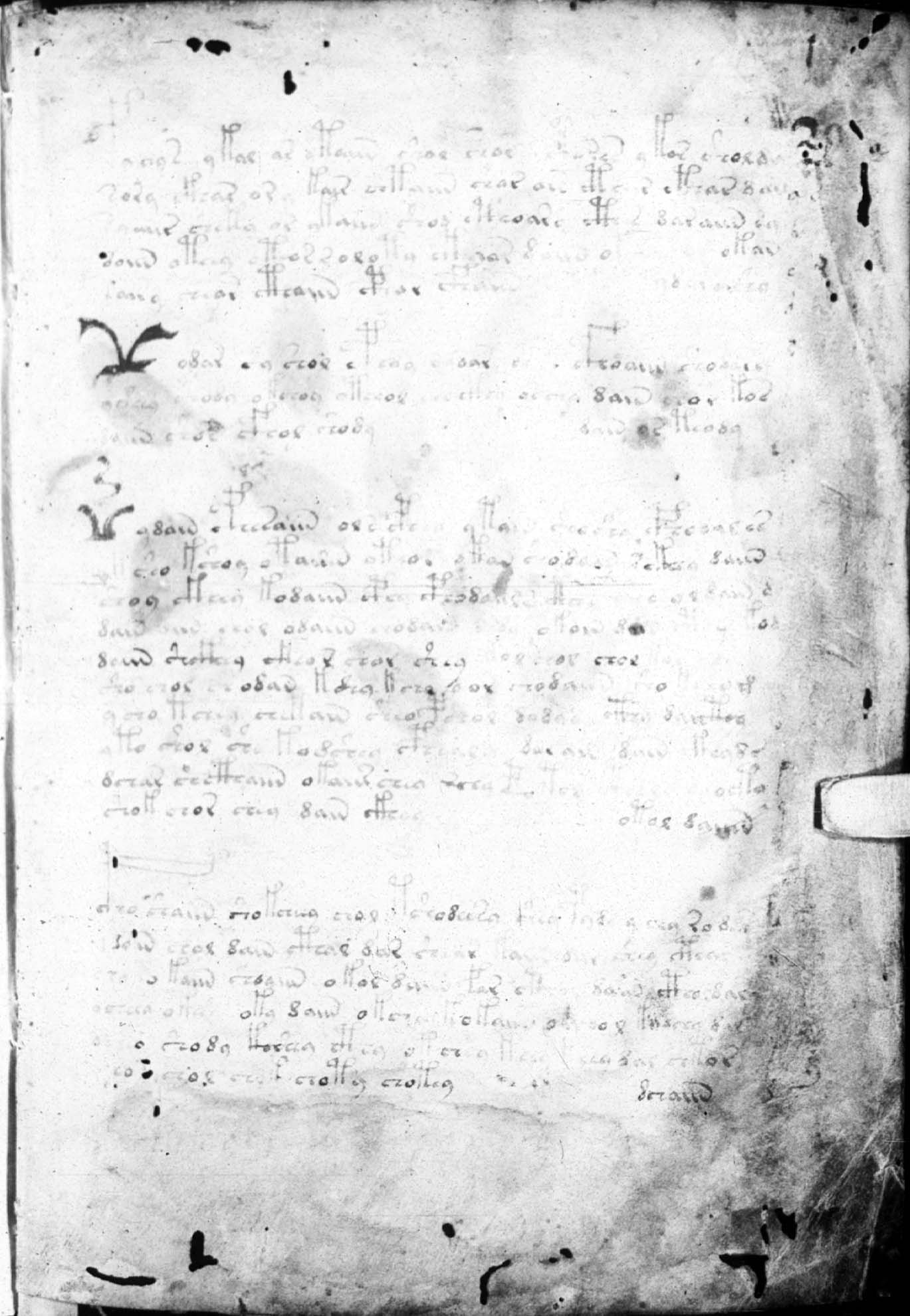 Copy of The Voynich Manuscript Voynich Manuscript Copy